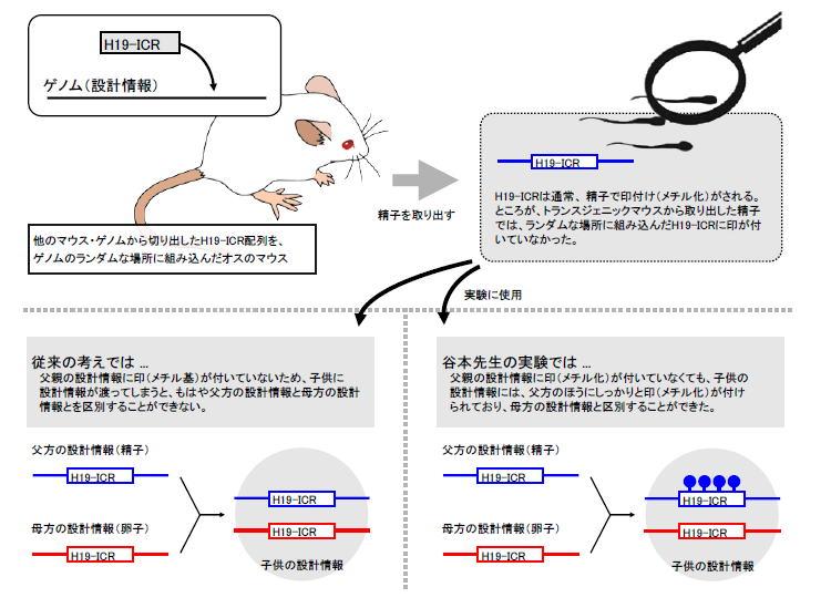 筑波大学生物学類学生による教員...