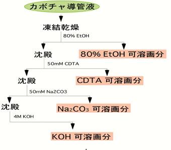 カボチャ導管液に含まれるペクチン多糖の解析