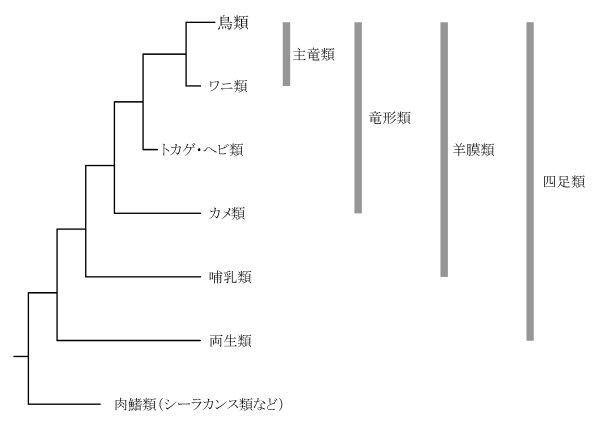 下位分類 両生類