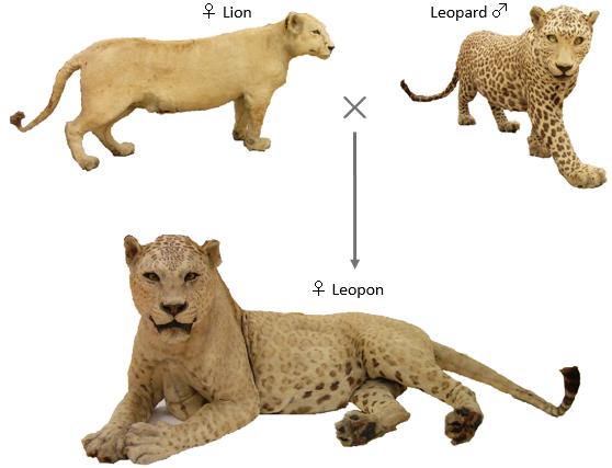 Hybrid speciation